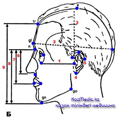 краниометрия қазақша