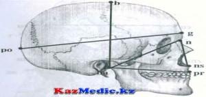Краниометрия. Бассүйек индекстерін анықтау