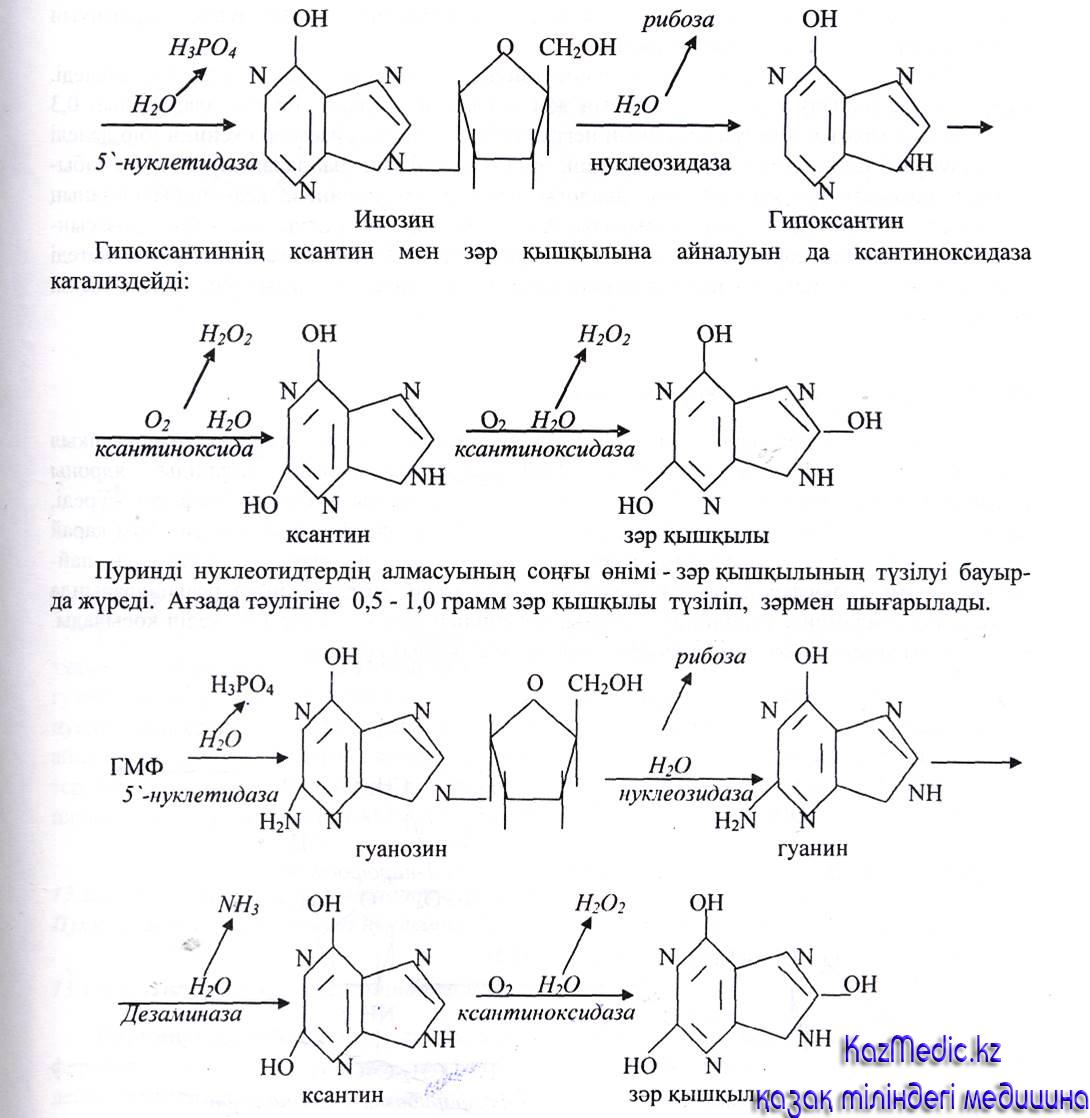 нуклеин қышқылдары