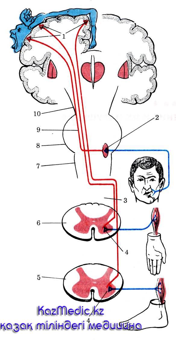 паралич сал ауруы