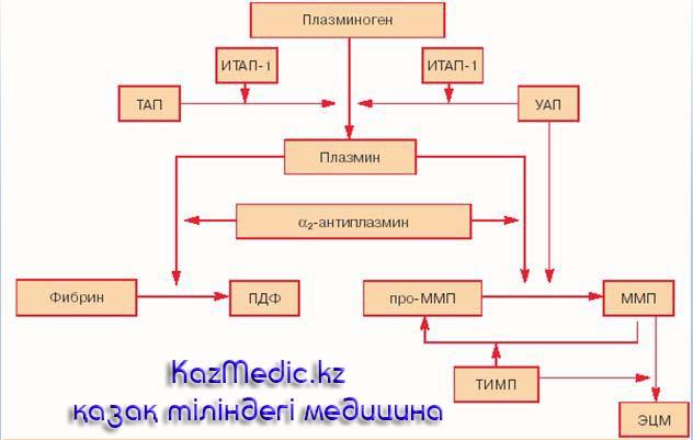 тромболитиктер