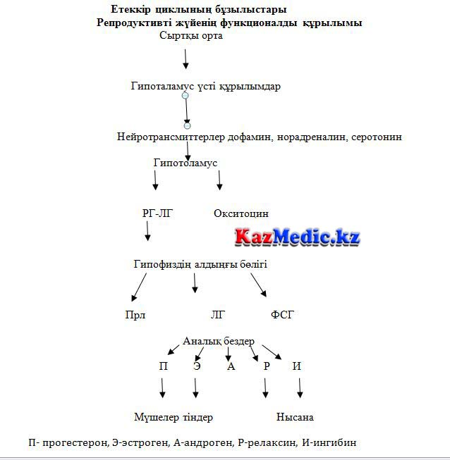 Етеккір циклының бұзылысы