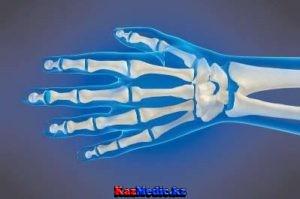 Білезік және толарсақ буындырының анатомиясы