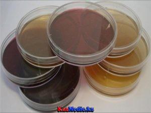 Бактериялар қоректену және тыныс алуы. Қоректік орталар