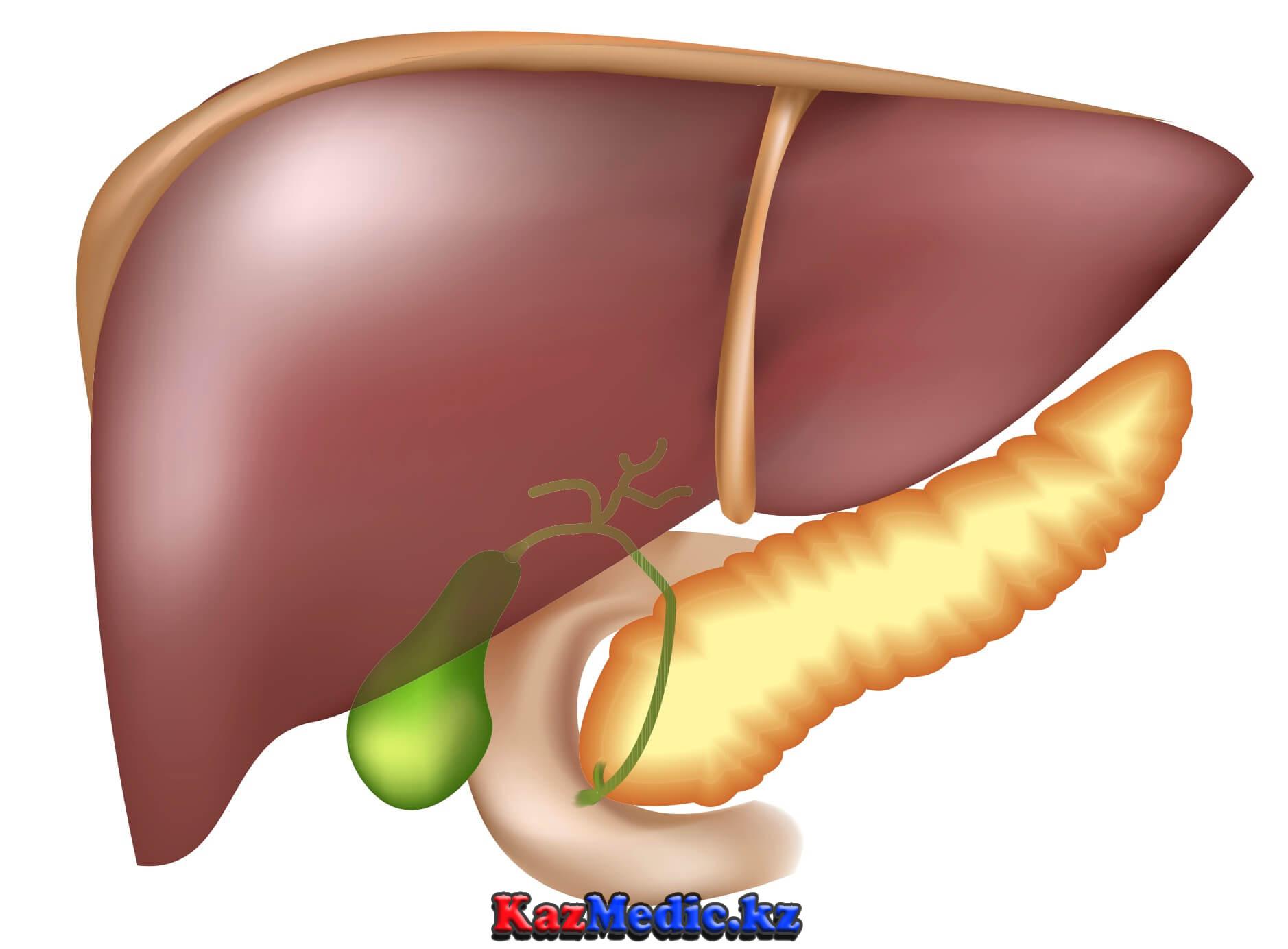 бауыр ауруы кезіндегі геморрагия