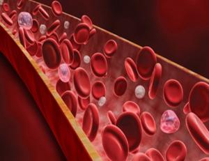 Гемофилияның тұқым қуалауы