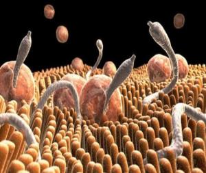Ішек паразитарлы аурулары (гельминтоздар)