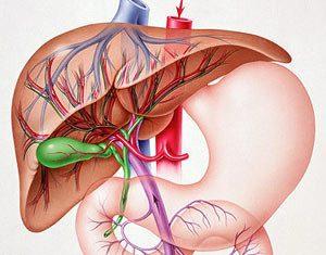 Бауыр, өт жолдары және өт өзегінің анатомия мен физиологиясы