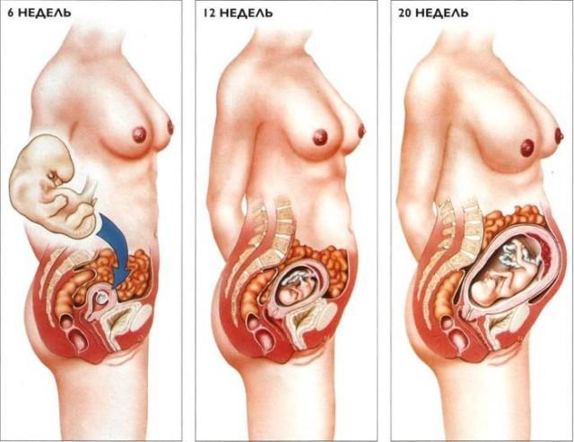 Жүктілік кезіндегі бүйректің және зәр шығару жолдарының анатомиялық-физиологиялық ерекшеліктері