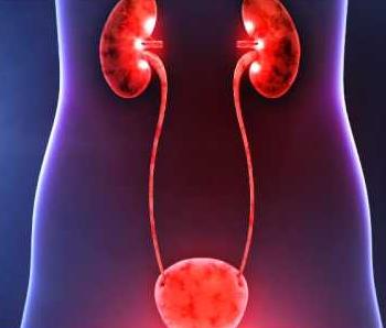 Несеп шығару жолдары инфекциясының түрлері, этиологиясы және патогенезі
